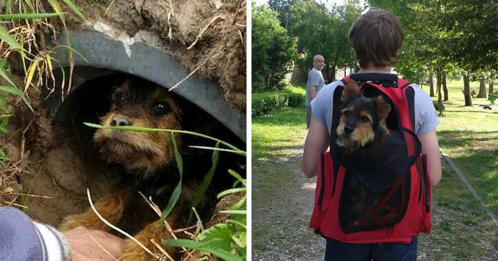 Couple Spots Someone Peaking Their Head Out From Ditch, Finds Dog With Broken Legs Inside