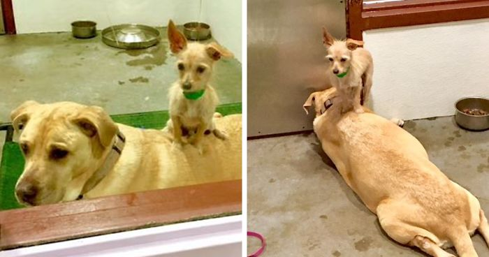Shelter Dog Stays Glued To His Bigger Doggo Friend To Make Sure Someone Adopts Them Together