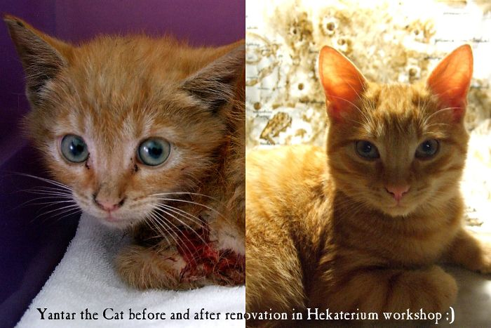 Yantar. The Day I Pulled Him Out From A Car Engine And A Year After. (p.s. That Blood Is Mine. :p The Kitty Was So Scared When I Grabbed Him He Fighted Desperately. But I Had No Time To Wait – The Lady Wanted To Drive Off No Matter The Cat In He Engine Of Her Car).