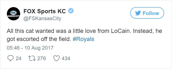 kitten-disrupts-baseball-game-busch-stadium-0