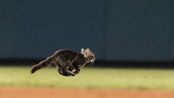 kitten-disrupts-baseball-game-busch-stadium-13