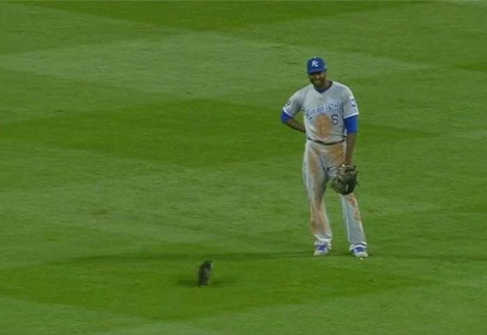 kitten-disrupts-baseball-game-busch-stadium-2
