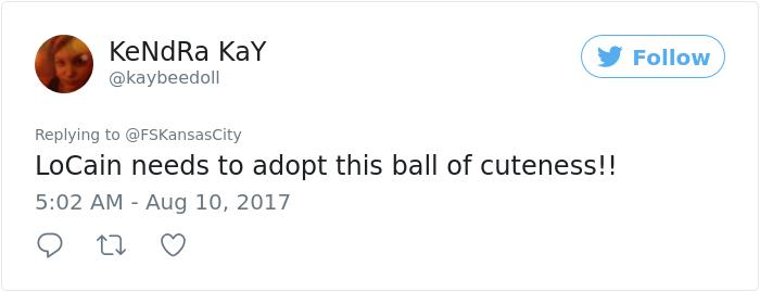 kitten-disrupts-baseball-game-busch-stadium (7)