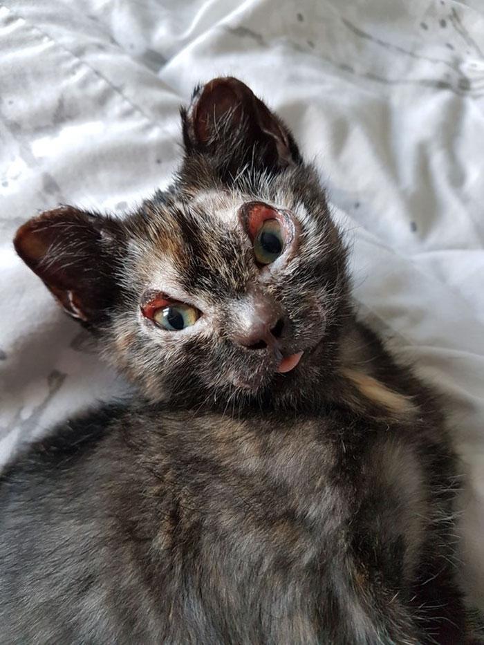 luckiest-britain-kitten-fire-burns-phoenix-1