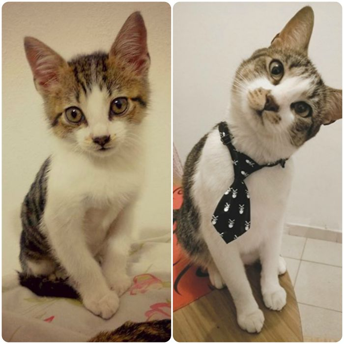 Muffin. 2 Months - 3 Years