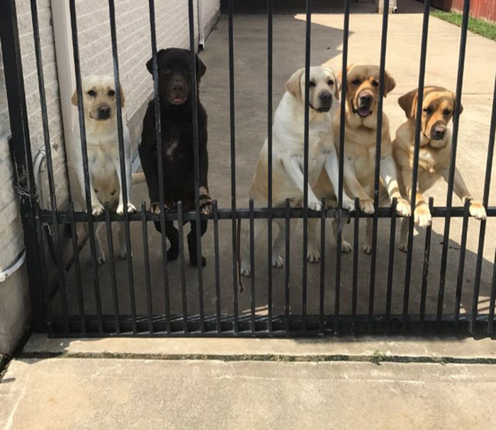 mailman-dog-lover-home-security-camera-video-texas-01