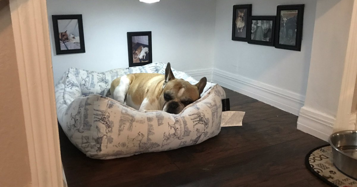 Man builds entire bedroom under stairs for his dog the for Bedroom under stairs