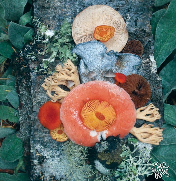 Nature Medleys
