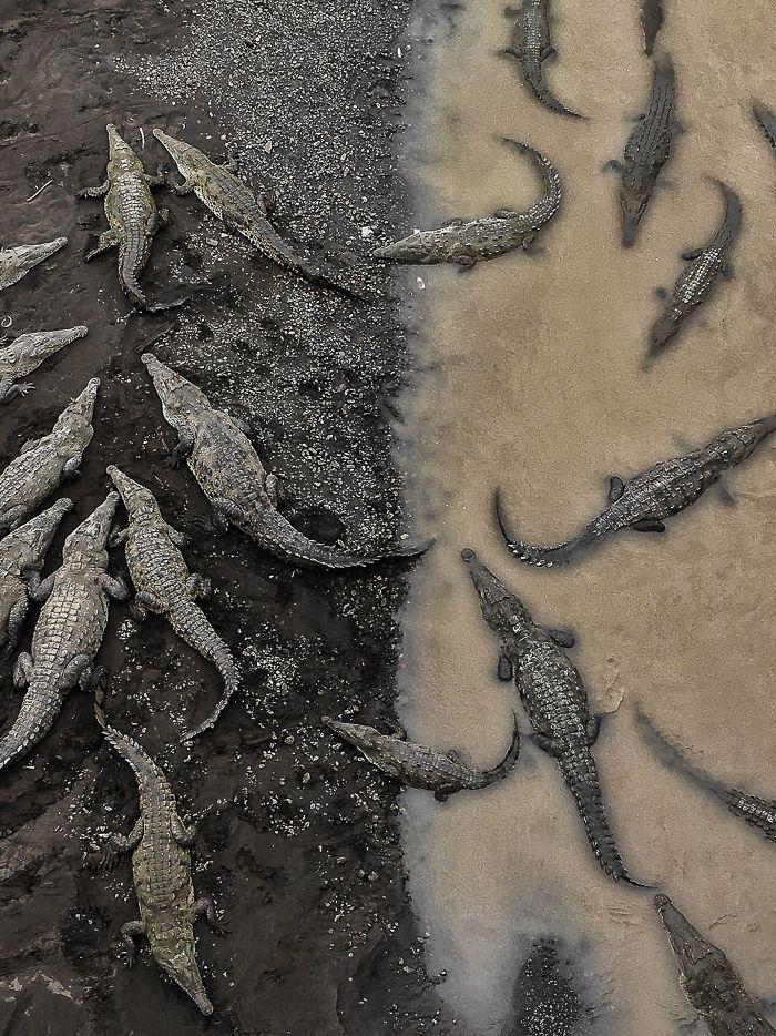 3º premio, Naturaleza: Cocodrilos en Río Tarcoles, Costa Rica