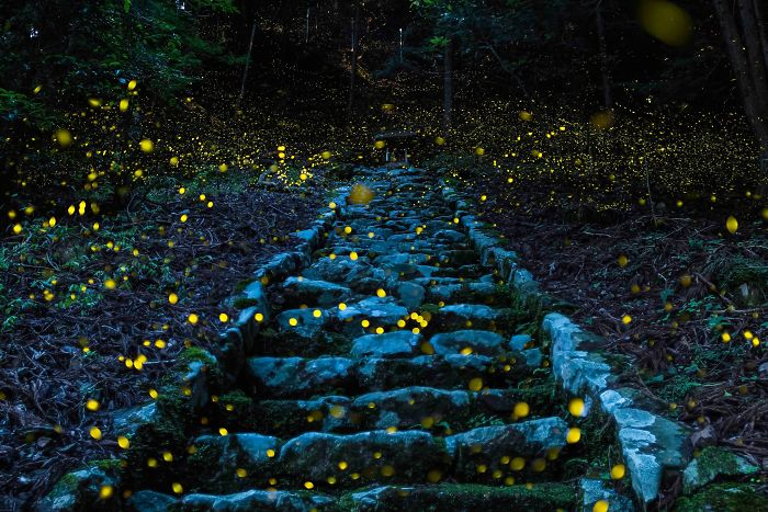 Honorable Mention, Nature: Forest Of The Fairy, Tamba, Japan
