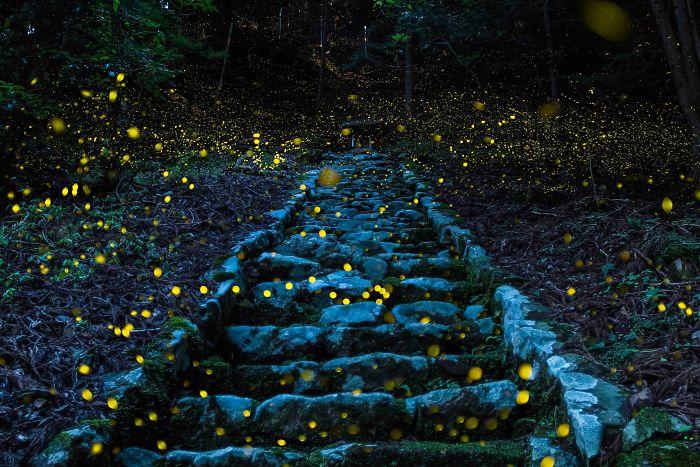 Mención de honor, Naturaleza: Bosque de las hadas, Tamba, Japón