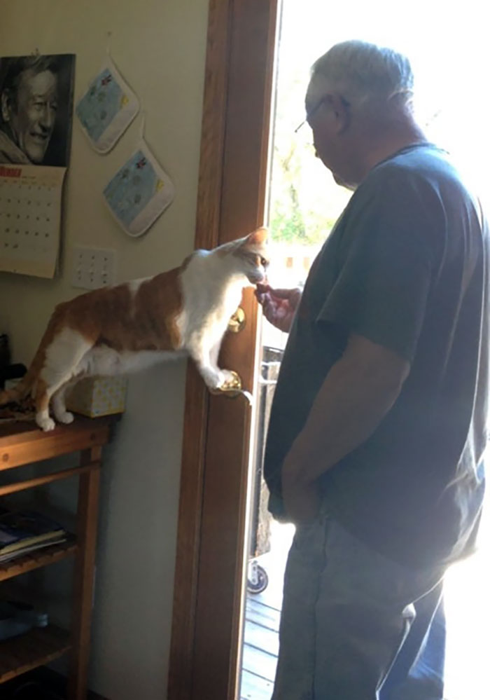 My Grandfather Didn't Want A Cat And Now He Shares Snacks With Tiger (One Of The Cats He Rescued From His Barn)