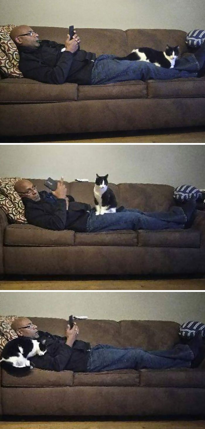 Our Cat Only Loves Our Dad, Who Hates Her