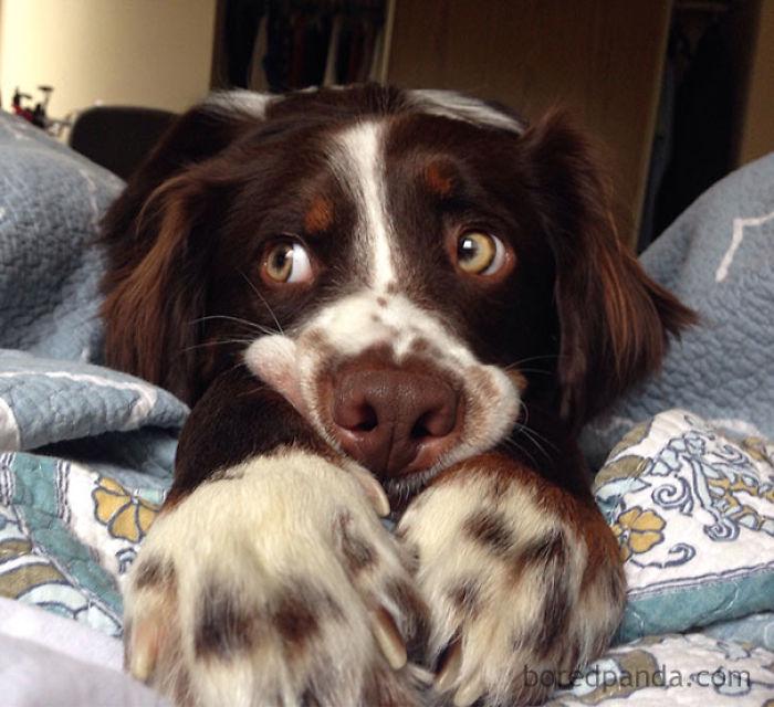 Esperando pacientemente a que me despierte y le de comida