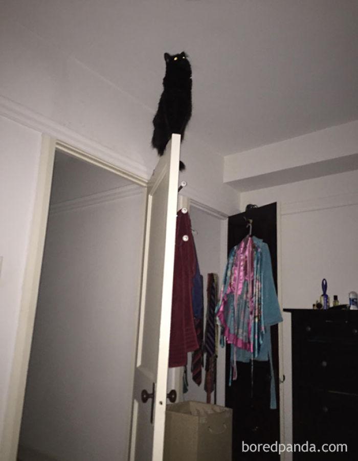 Me desperté en mitad de la noche con mi gato cantando la canción de su gente