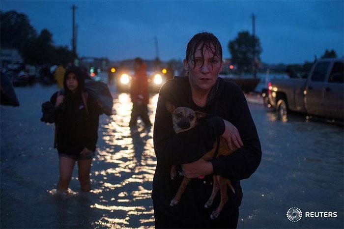 Tejanos Se Niegan A Dejar Atrás Sus Mascotas Mientras Evacúan