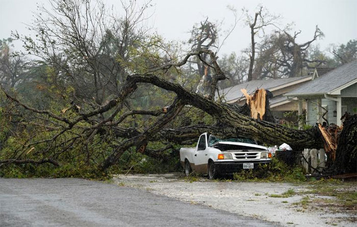 A Car Crushed By A Huge Tree In Rockport