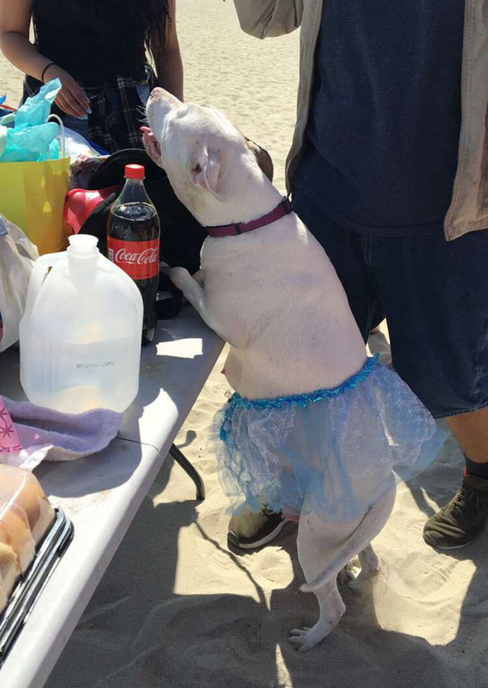 Pregnant Doggo Gets Her Very Own Baby Shower And Twitter Just Can - A pregnant doggo was given her very own baby shower and twitter is in love