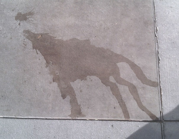 I Saw A Water Stain The Looked Like A Wold Howling At The Moon