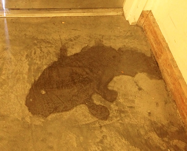 This Puddle Looks Like A Fish