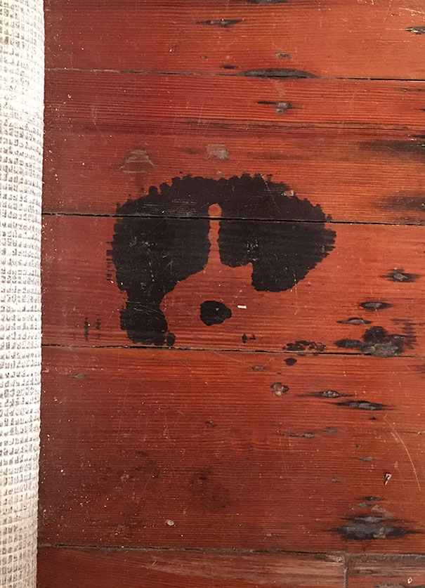 This Spilled Paint Stain Looks Like A Dog's Face