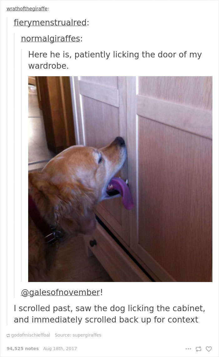 trained-dog-licking-door-tumblr-answer-normalgiraffes-25