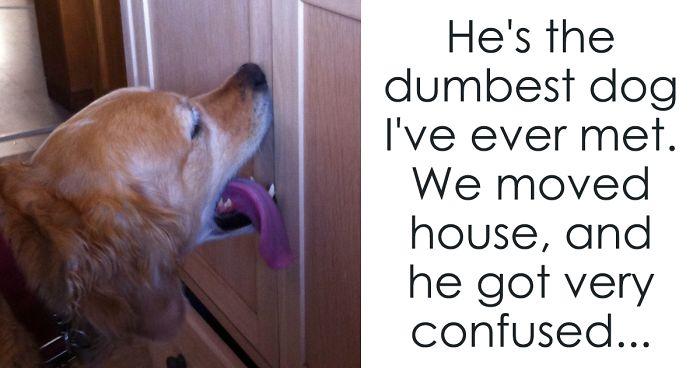 Dog Licks Front Door When He Wants To