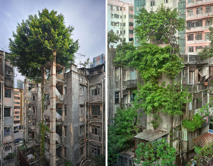 Trees Winning Against Concrete In Hong Kong