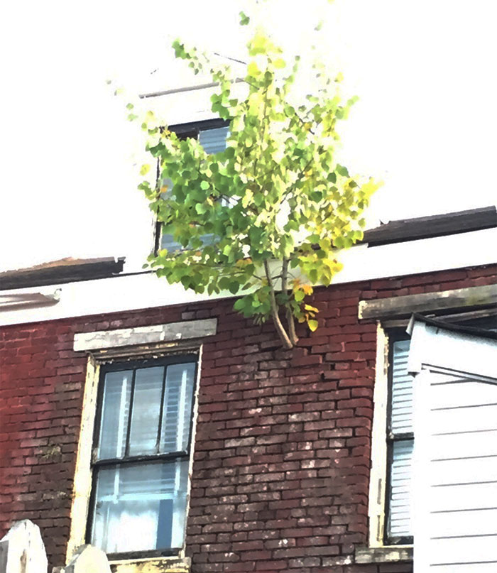 This Tree Is Growing Out Of The Side Of A House