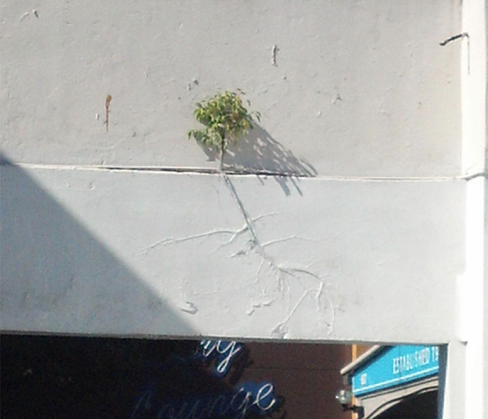 Tree Growing Under Paint