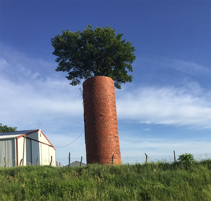 This Tree Grew Inside This Brick Silo And Looks Like A Carrot