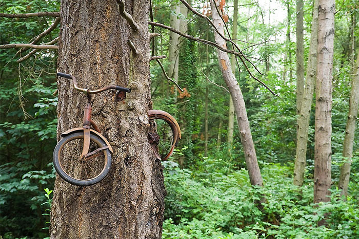 "The Famed ""Bicycle Eaten By A Tree"" Tucked In The Woods Right Off The Vashon Highway On Vashon Island, Washington"