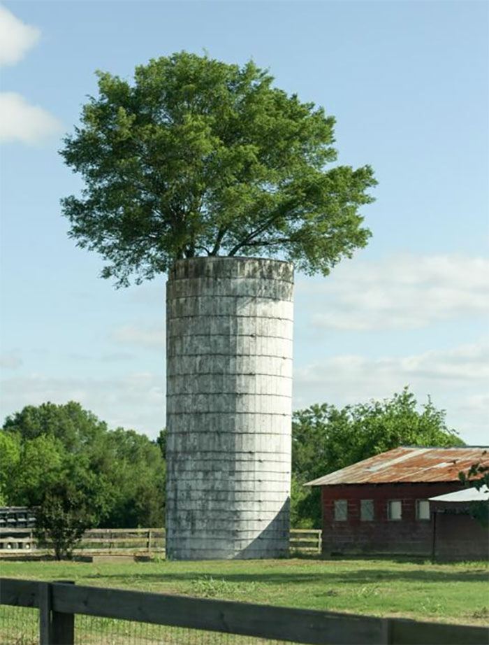 20+ Year Old Tree Growing Out The Top Of A Silo