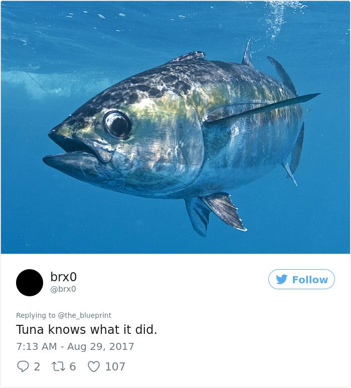 tuna-shamed-car-bumper-sticker-the-blueprint (15)