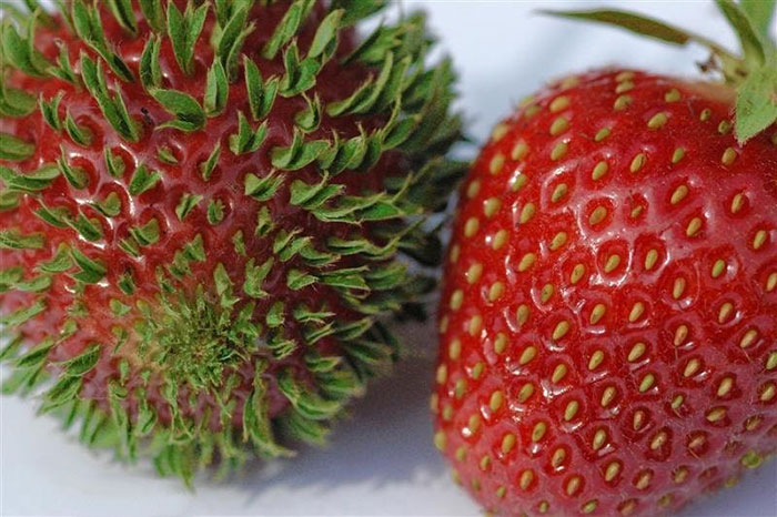 10+ Terrifying Pics Show What Happens When Fruits And Veggies Start Sprouting Early