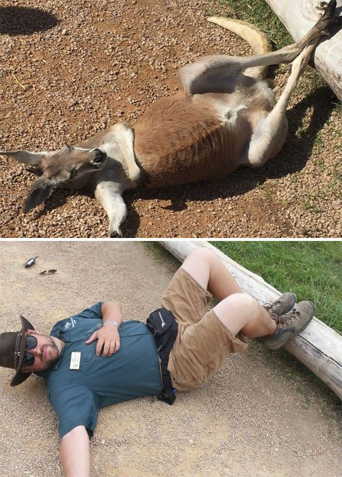 Zookeepers As Animals