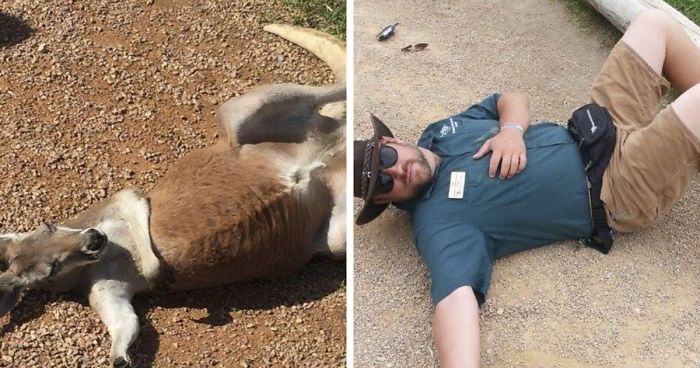 Hilarious Pics That Show What Happens When Zookeepers Have Too - 20 hilarious photos of what zookeepers get up to after closing hours