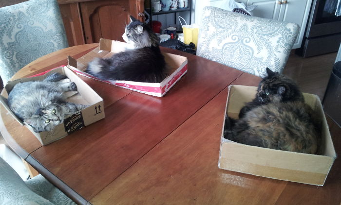 Box-lovin' Cats! L To R: Trixie, Pips, Amber