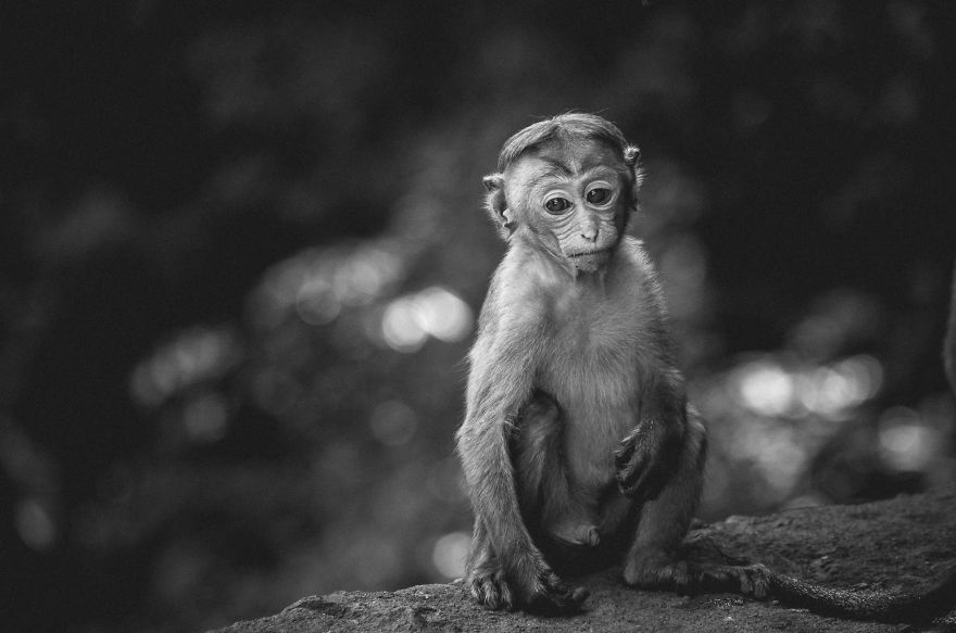 I Took This Series Of Makaka Portraits During My Trip In Sri Lanka