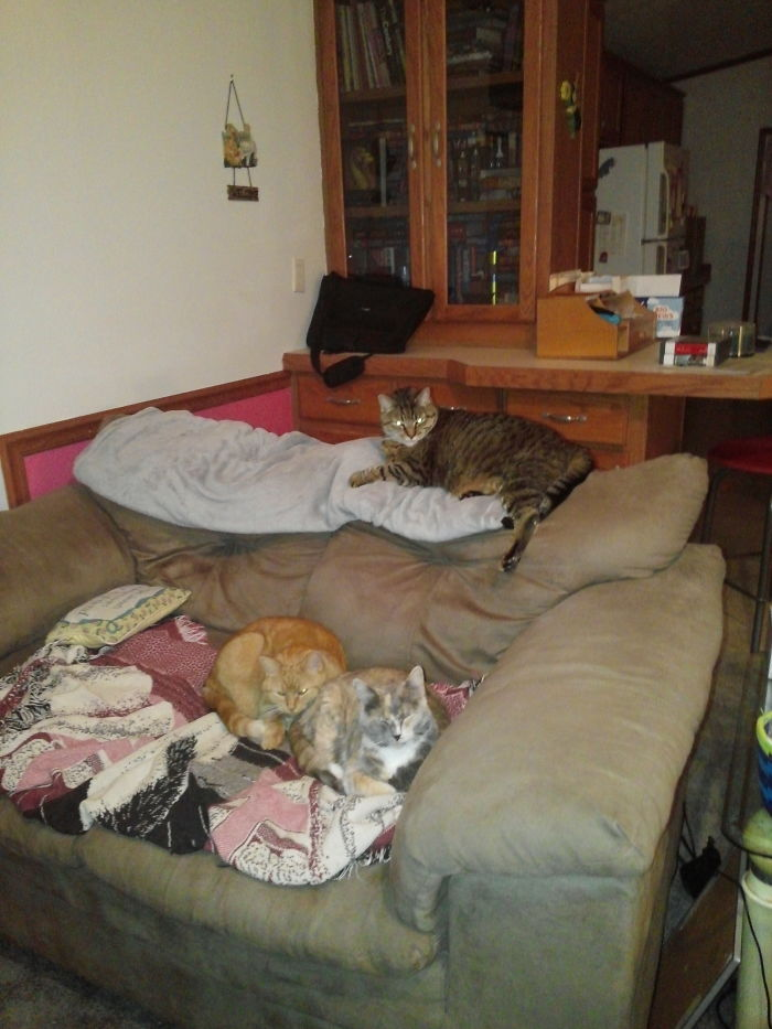 3 Cats And A Couch