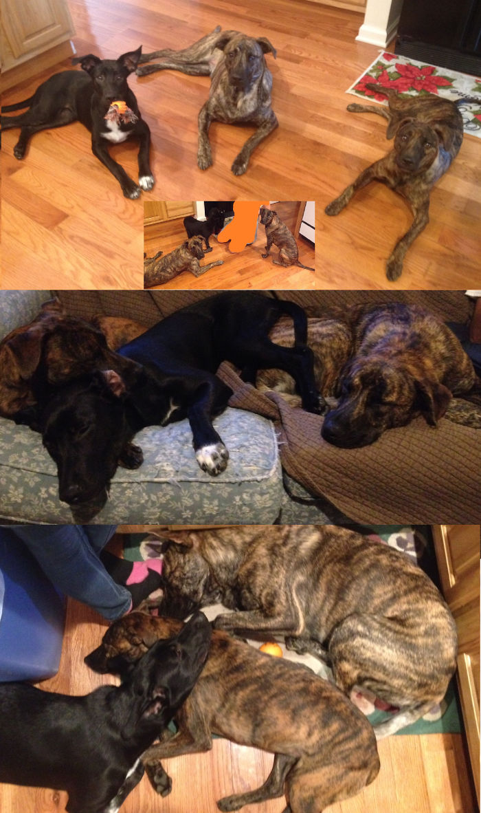 All My Rescue Animals! 3 Dogs, 2 Cats, And 3 Chickens (not Pictured).