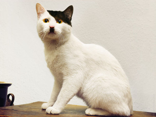 40 Cats With The Craziest Fur Markings Ever Bored Panda Interesting Cat Fur Patterns