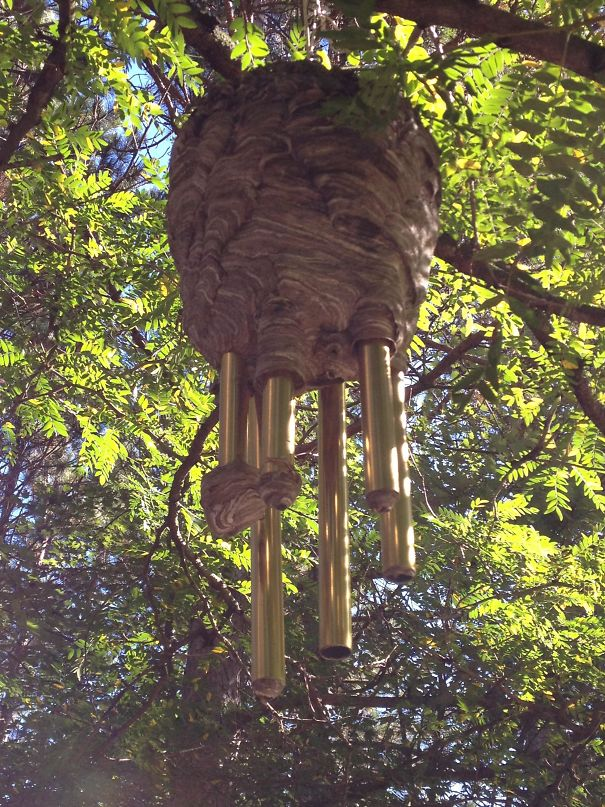 A Beehive Built Around Wind Chimes At My Friend's House