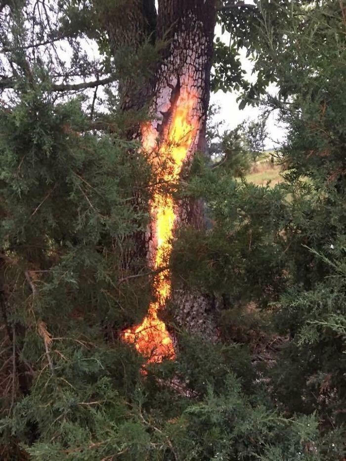En Este Árbol En Nebrasca Cayó Un Rayo Y Después Se Quemó Un Día Después