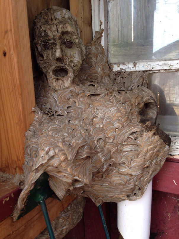 An Abandoned Hornet's Nest My Dad Found In His Shed That He Hadn't Been In For A Couple Years. The Head Is Apart Of A Wooden Statue It Fused With