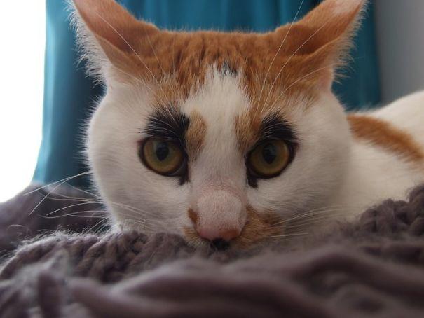 My Friend's Cat Has Bushy Eyebrows