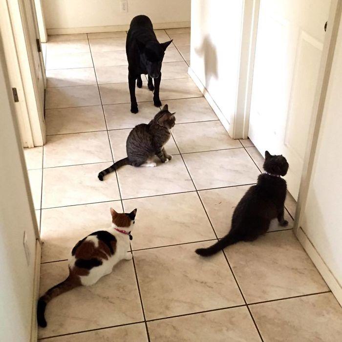 Mi esposa está en el baño y las mascotas aún no han comido