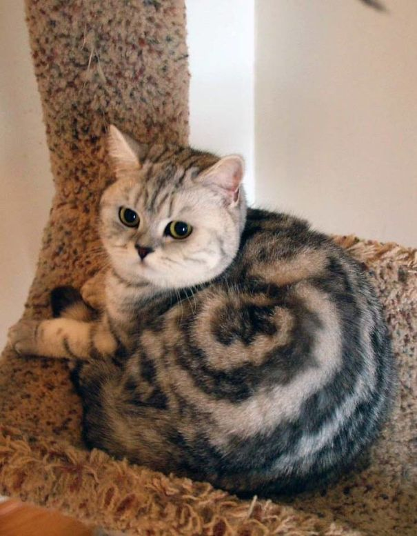 40 Cats With The Craziest Fur Markings Ever Bored Panda Custom Cat Fur Patterns