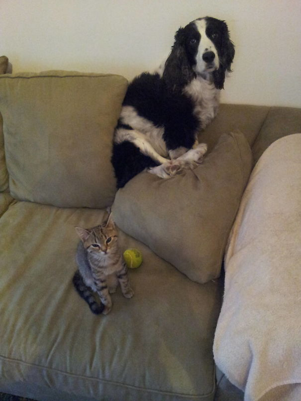 The Kitten Really Needs To Stop Bullying The Dog