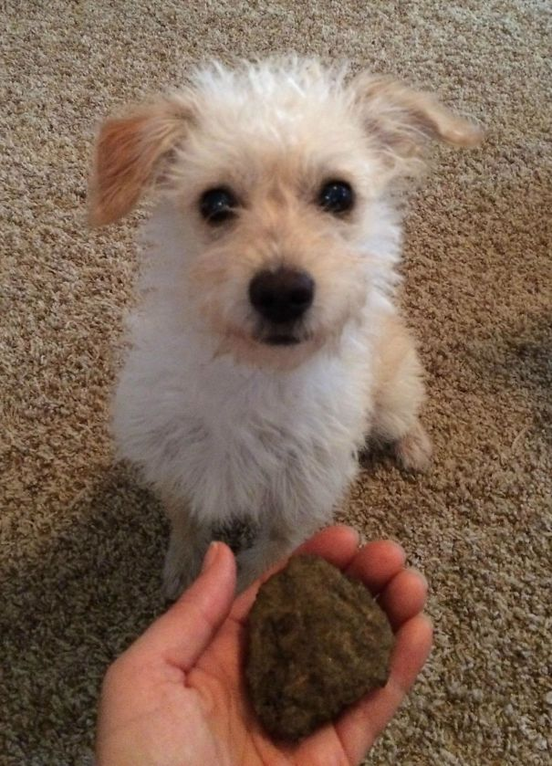 I Hear Cats Bring Dead Birds As Gifts. By Puppy Brings Me Rocks. Rocks